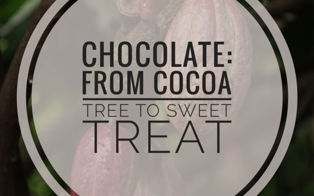 Did you ever wonder where chocolate comes from? I'm sharing the story of chocolate – from cocoa tree to sweet treat, and some tips to for it into a healthy meal plan