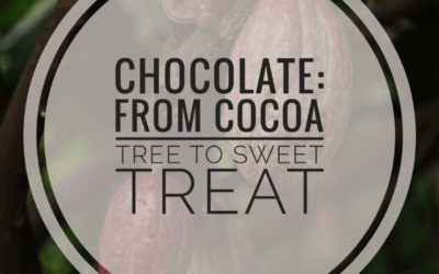 Chocolate – From Cocoa Tree To Sweet Treat