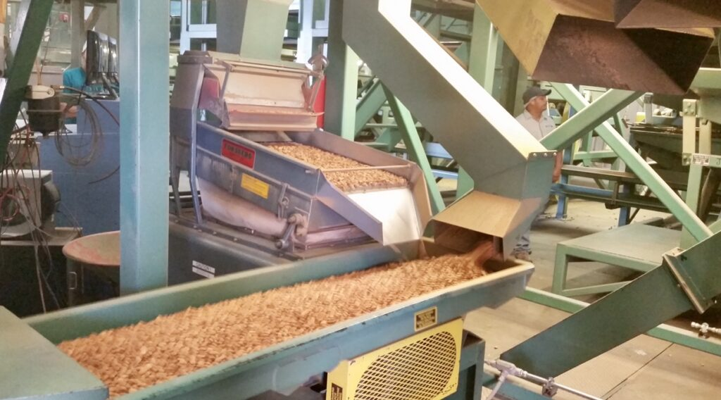 Almonds being sorted in the almond factory