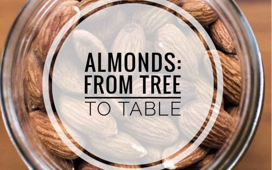 How Almonds are grown - from tree to table