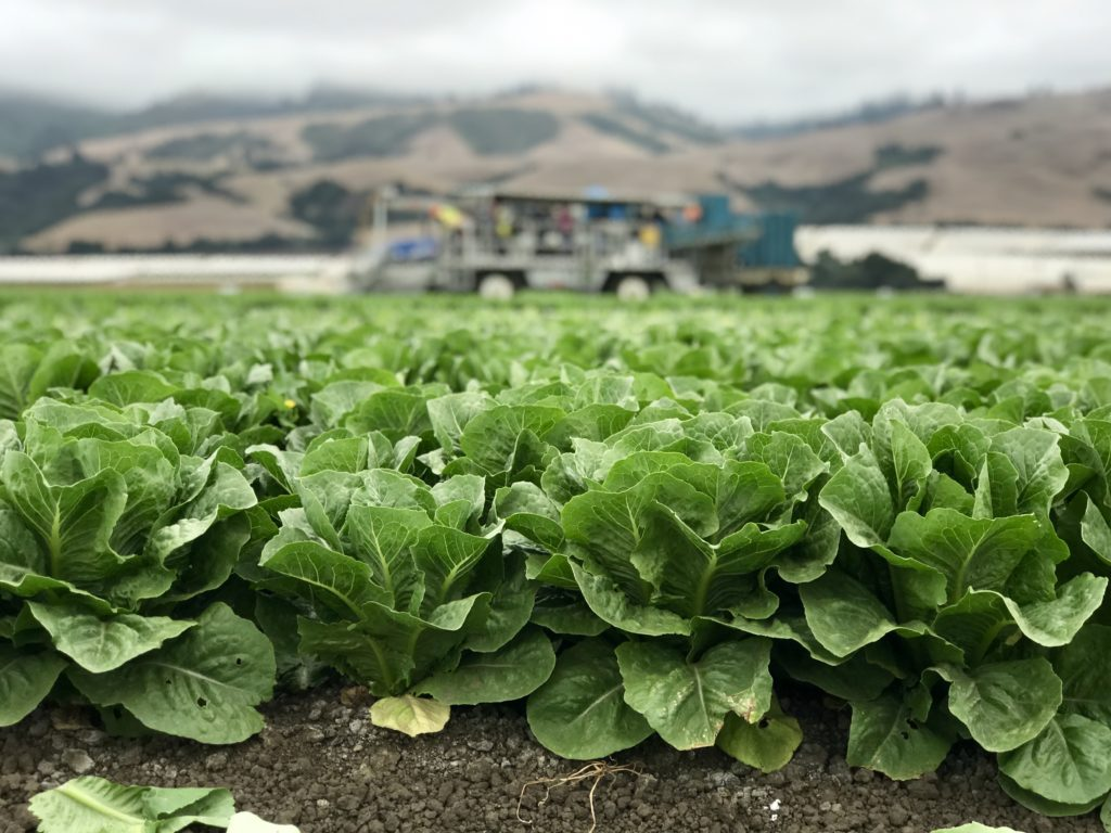 This photo is taken in a Romaine lettuce field in Monterey California and shows how Romaine is grown and how farmers keep it safe in the field. We learned the how it is grown, rinsed, packaged and shipped directly from the farm.